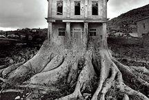 Magic Trees & Faery Houses