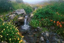 obrázky - príroda