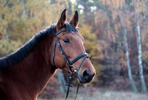 HORSES & HORSE RIDING