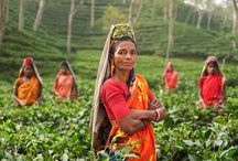 Tea And Srilanka / Did you know – Tea is the most popular beverage, next to water, in the world? Check out this article on tea and it's impact on Sri Lanka.