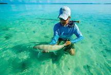 January 2015 Top 10 Ten Fishing Photos / The chosen top ten photos from our January photo of the month competition!