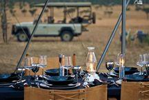 Safari Ambience