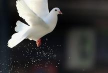 Awsume Birds