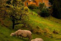 Sustainable Farm & Garden / The farm life on the family farm with an sustainable organics. / by George Harrington