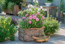 Blomster i potter og kasser