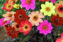 palette of colours