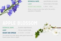 kalendár pestovania kvetín