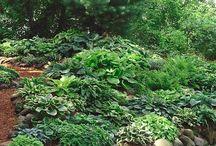 Plants I want in my yard