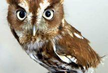 OWLS 8> / by Allison Randolph