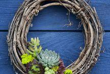 Exotic Succulent Planters / Exotic Succulent Planters