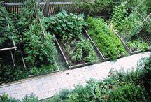 Gardening, allotments, plants