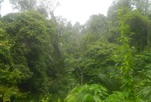 Gunung Leuser National Park / One of the last truly wild swaths of jungle left in Sumatra