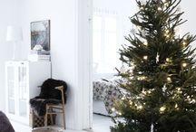 Christmas trees / Christmas