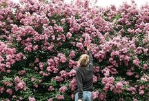 Beauteous Blossoms