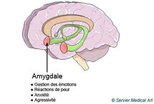 ~ neurosciences ~