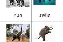 Connor Preschool - Animals Unit Study