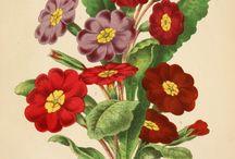 Botany 2
