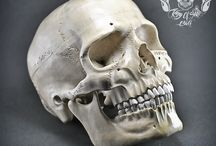 Bigger Than Live Size Realistic Hand Carved Human Skull Prickly Ash Wood Rare / Find this Marterpiece on Etsy