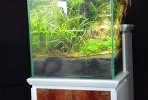 Crystal Reef e Pet, Cerea, Vr