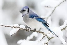 Animaux oiseaux / Oiseaux