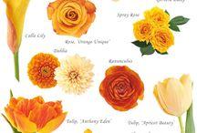 Color: Orange / by Rose of Sharon Floral Designs