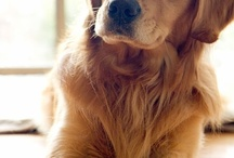 Puppy, kitty, dog and cat. / by Jim Barron