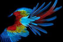 Bird Photos / by Peg Lowmiller