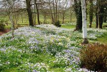 Frühling lässt sein blaues Band...