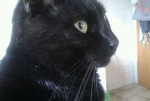 Chats noirs mon ami