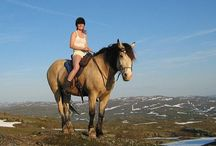 Horse trails & freedom / To live my dream, riding trails with my horses