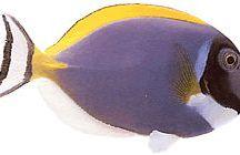 Reef addict!!! / Wild life in the deep... La vie des profondeurs!