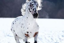 Horses / My favourite pictures of horses