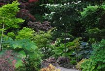 Shade Gardens / Different types of shade gardens