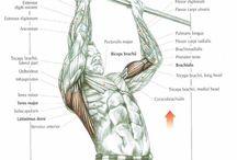 Anatomy of exercises