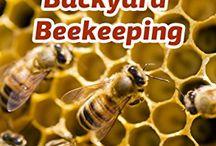 Beekeeping / Beekeeping tips