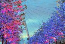 Flower Power / by Susie Hossack