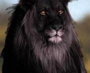Animals of Beauty