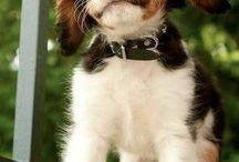 something cute