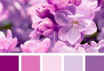 Colour Palettes - Ideas for Blog Brands