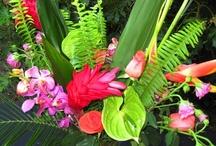 Flowers / by Leenie Tupou