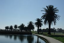 Albert Park Lake / Melbourne Events Group runs The Park, a venue on Albert Park Lake. We want to share some of the amazing views and features we get to experience daily