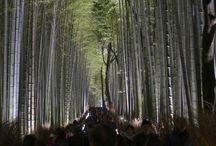 paineis bamboo