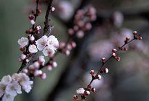 Fleurs au Domaine de Capelonge / Fleurs du parc et compositions florales