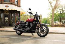 Harley / by Jacqueline Bauza