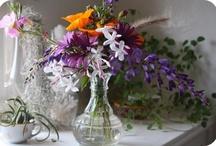 flors i plantes