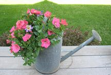 Plant ideas / Ideas for plants, flowers and flower arrangements that are out of the ordinary.