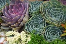 Succulent Succulents! / by Peggy Keel Burton