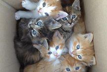 Kitties / by Dyuti Monishita