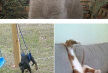 Cute pics / Animals