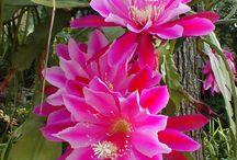 Flowers *amazing